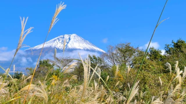 富士富士の森の植物や木の景観図 ビデオ