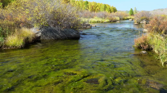 Landscape with seaweed in mountain river. video