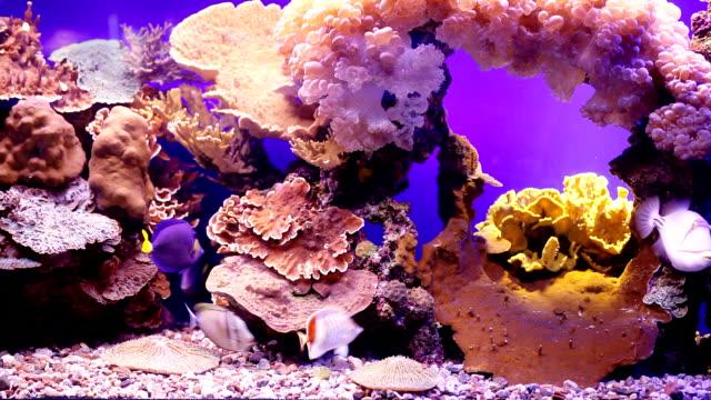 landscape with tropical fishes and corals. - akvarium byggnad för djur i fångenskap bildbanksvideor och videomaterial från bakom kulisserna