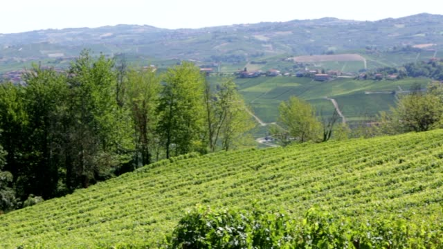 langhe green hills with vineyards in a sunny summer in piedmont, italy - langhe video stock e b–roll