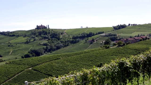 langhe hills pan with green vineyards in summer, italy - langhe video stock e b–roll