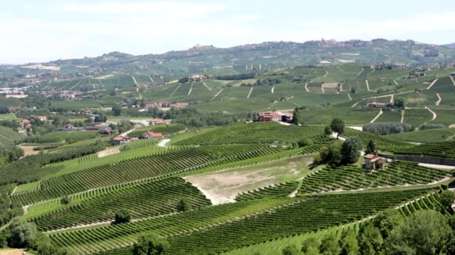 langhe hills pan with green vineyards in summer, piedmont, italy - langhe video stock e b–roll