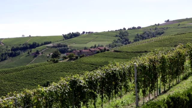 langhe hills with green vineyards in summer, piedmont, italy - langhe video stock e b–roll