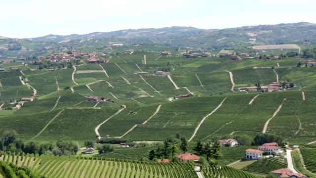 langhe hills with green vineyards panning in summer, italy - langhe video stock e b–roll