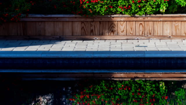 Lantana flowers with water reflection scene 4K