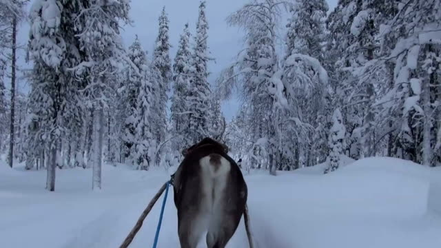lapland - finland - reindeer stock videos and b-roll footage