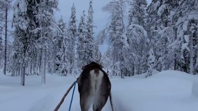 vídeos y material grabado en eventos de stock de laponia-finlandia - reno mamífero