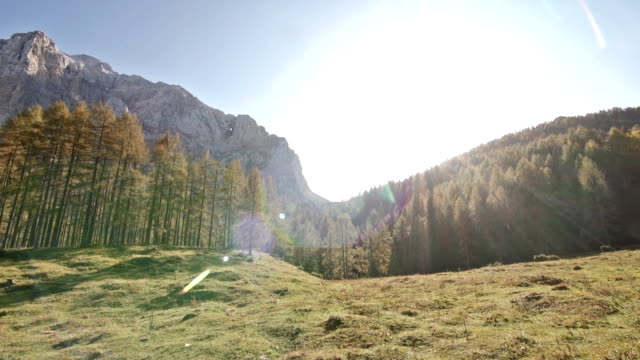 Larch dorest in the mountainside video