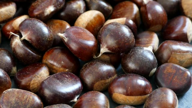 large amount of sweet raw chestnuts. forest products, natural chestnut, - group of people filmów i materiałów b-roll