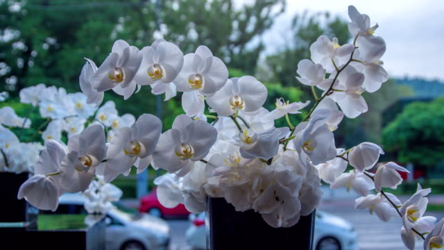 Large and oustanding bouquet of white orchid`s blossoms