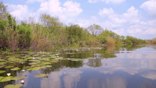 Large area of swamp with leafs water lily, driving diagonally, Serbia (Obedska swamp) video