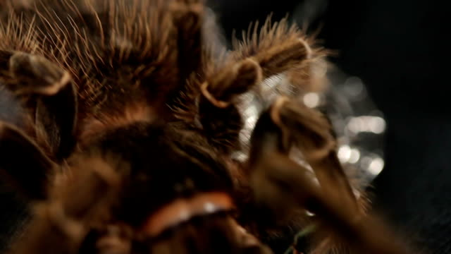 Large dangerous tarantula crawls on decorative elements video