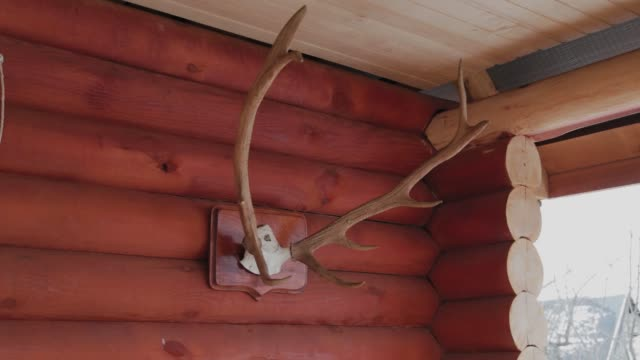 Large deer horns on a wooden log house
