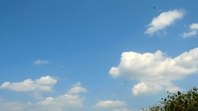 A large flock of birds flying in the sky video