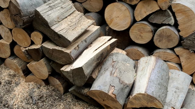 large forestry wood pile - segatura video stock e b–roll