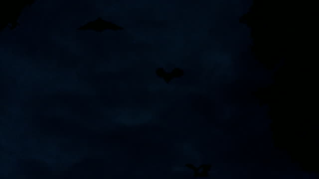 Large Group of Bats at Dusk-  Tracked Shots video