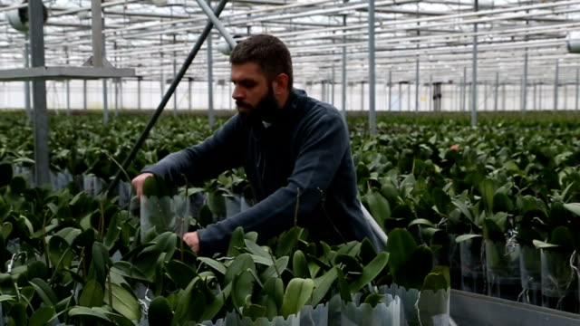 Large group of potted plants with a worker video