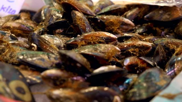 vídeos y material grabado en eventos de stock de gran montón de mejillón fresco y refrigerado en los estantes con hielo en el mercado de la ciudad - pescado y mariscos