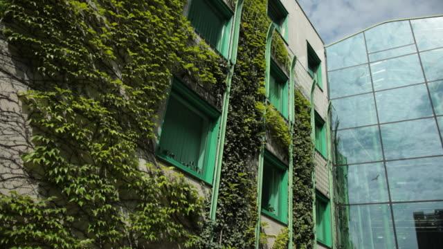 큰 집은 완전히 덤불, 녹색 프레임많은 윈도우 자란 - 아이비 스톡 비디오 및 b-롤 화면
