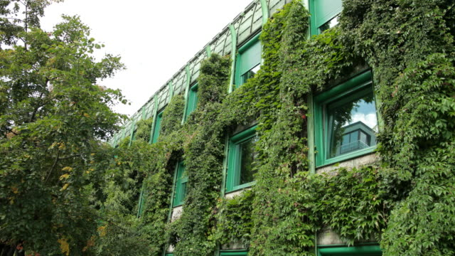 vídeos de stock e filmes b-roll de large house completely overgrown with bushes, many windows with green frames - ivy building