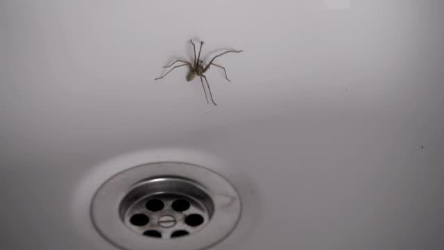 stort hus spindel fastnat i ett badkar - spindel arachnid bildbanksvideor och videomaterial från bakom kulisserna