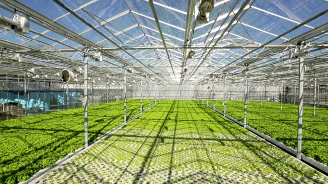 Large industrial greenhouses. Green beds. Shooting from height