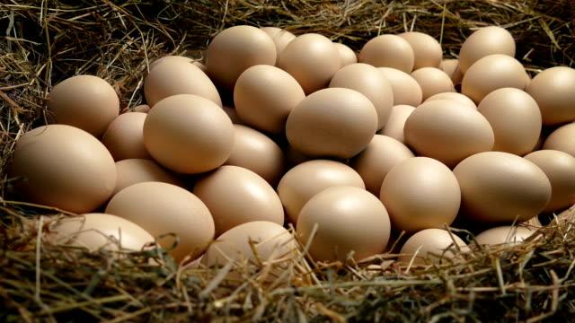 large nest with many eggs - gad filmów i materiałów b-roll