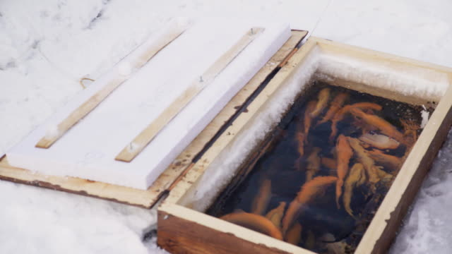 A large number of trout swimming in a water body wooden box video