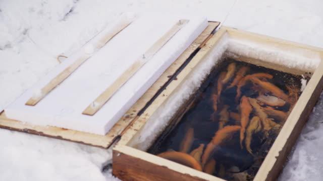 eine große anzahl von forellen schwimmen im wasser körper holzkasten - sonnenbarsch stock-videos und b-roll-filmmaterial