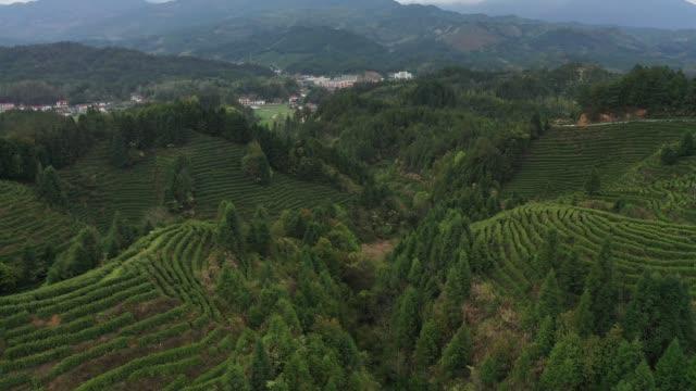 vidéos et rushes de grande montagne extérieure de thé - vanille