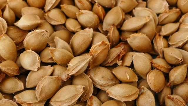 large quantity of apricot kernel, pharmaceutical industry and apricot kernels, - albicocca video stock e b–roll