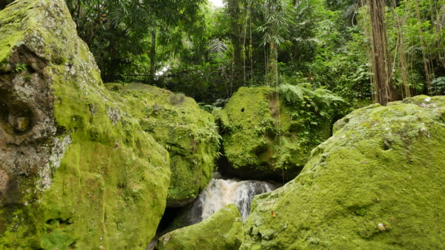 Large rocks covered in bright green moss and lianas at Elephant Cave Temple