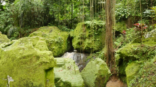 Large rocks covered in bright green moss and lianas