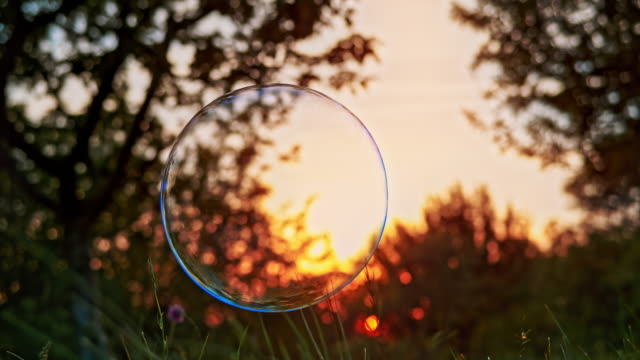 SLO MO Large soap bubble bursting as it touches grassy ground outside in the setting sun