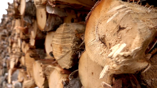 CLOSE UP: Large stack of firewood logs and cross-section of the tree trunk video