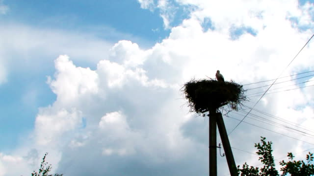 large stork nest on an electric pole video