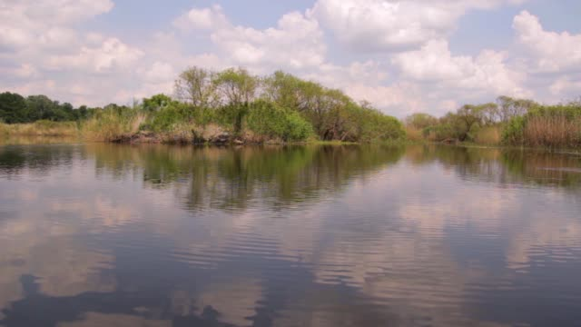 Large swamp-forest area and natural reserve, ride on the water (Obedska swamp) Serbia video