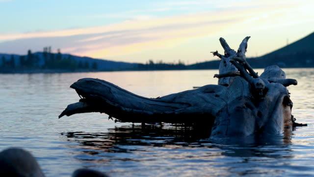 Large tree log floating adrift on scenic lake video
