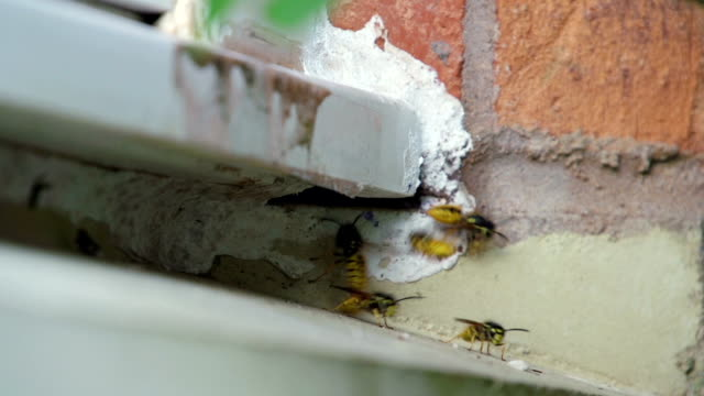 Large Wasp Nest Under Domestic Window video