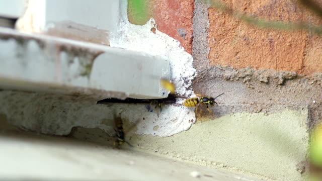großes wespennest unter heimischen fenster - wespe stock-videos und b-roll-filmmaterial
