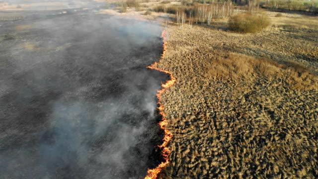 vídeos de stock, filmes e b-roll de incêndios em grande escala. grama ardente e árvores em uma grande área. - sem cultivo