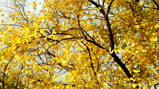 Late autumn leaves branch video