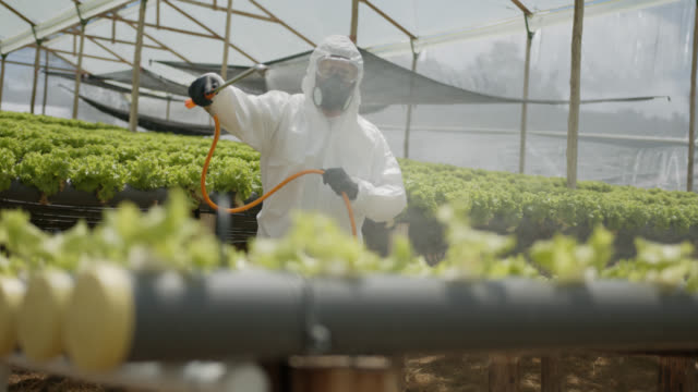 Latin American worker wearing protective workwear fumigating a crop at a greenhouse