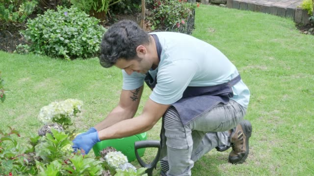 latin man arranging and watering his white flowers. (slow motion) - solo un uomo giovane video stock e b–roll