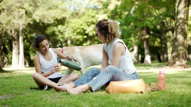 Latin women enjoying the day in nature Two Latin women are sitting on a lawn in park, sharing traditional Argentinian tea mate and talking. picnic stock videos & royalty-free footage
