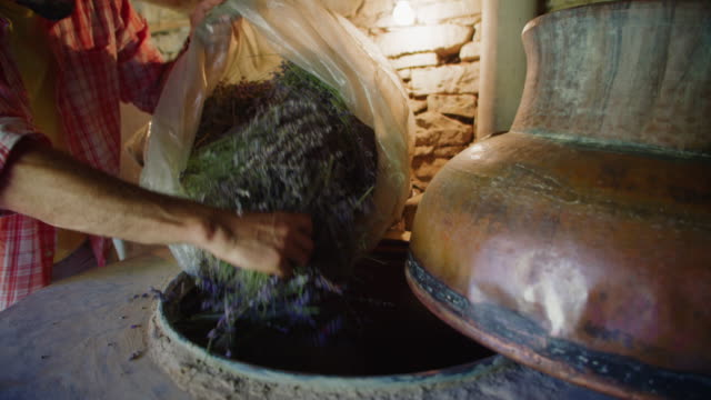 Lavender. Essential oil production season is now. Farmer in the distillery preparing the lavender for the oil extraction process. Shot in slow motion.