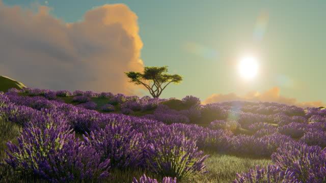 Lavender fields fly-through