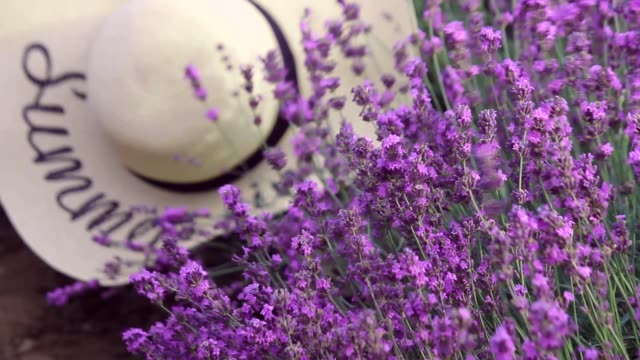 Lavender flowers, hat on flowers, purple flowers on the lavender field. Bouquet of fragrant and fragrant flowers.