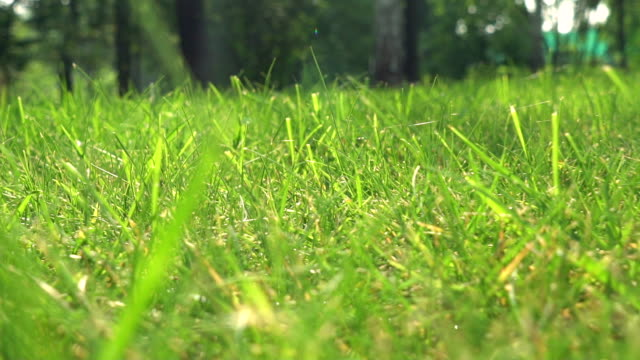 Lawn in the yard with trees video