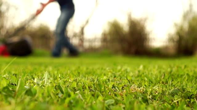 gräsmatta slåtter i trädgården - gräsmatta odlad mark bildbanksvideor och videomaterial från bakom kulisserna